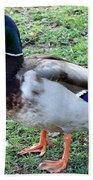 Duck - Standing Beach Towel