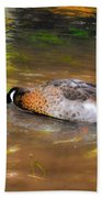 Duck Submerge It Head Into The Water Looking For Food In The River 2 Beach Towel