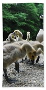 Ducklings Beach Towel