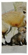 Dunr Fox Father And Child Beach Sheet