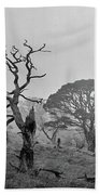 Dusk, Crannoch Woods Beach Towel