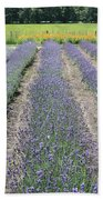 Dutch Lavender Field Beach Towel
