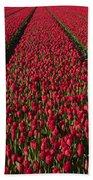 Dutch Tulips Second Shoot Of 2015 Part 1 Beach Towel