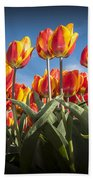 Dutch Tulips Second Shoot Of 2015 Part 2 Beach Towel
