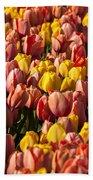 Dutch Tulips Second Shoot Of 2015 Part 9 Beach Towel