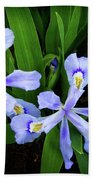 Dwarf Crested Iris Beach Towel