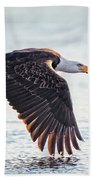 Eagle Catch Beach Towel