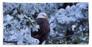 Eagle In A Frosted Tree Beach Towel