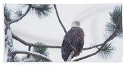 Eagle In A Pine Tree Beach Towel