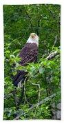 Eagle In Tree Beach Towel