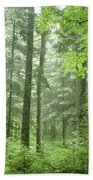 Early Morning In Swiss Forest Beach Towel