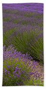 Early Morning Lavender Beach Towel