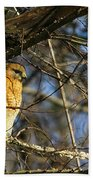 Early Morning Still Hunting  Coopers Hawk Art Beach Towel