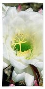 Easter Lily Cactus Flower Beach Towel