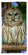 Eastern Barred Owl Beach Towel