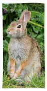 Eastern Cottontail Beach Towel