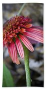 Echinacea Hot Papaya Beach Towel