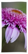 Echinacea Pink Double Delight Beach Towel