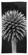 Echinops Monochrome Beach Towel