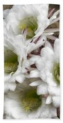 Echinopsis Blossoms  Beach Towel
