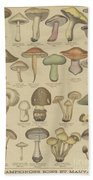 Edible And Poisonous Mushrooms Beach Towel