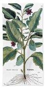 Eggplant, 1735 Beach Sheet