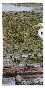 Egret And Turtles Beach Towel