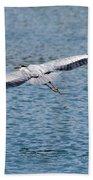 Great Blue Heron In Flight Beach Towel