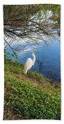 Egret In Florida Color Beach Towel