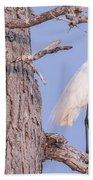 Egret In Tree Beach Towel