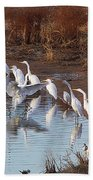 Egrets Gathering For Fishing Contest. Beach Towel
