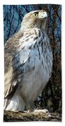 Elder Hawk Beach Towel