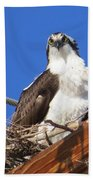 Electric Blue Osprey Beach Towel