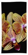 Elegant Orchid On Black Beach Towel