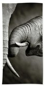 Elephant Affection Beach Towel
