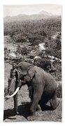 Elephant And Keeper, 1902 Beach Towel