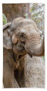Elephant And Tree Trunk Beach Towel