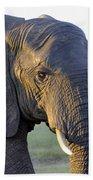 Elephant Close Up Beach Towel