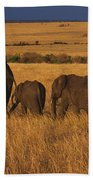 Elephant Family - Sunset Stroll Beach Towel