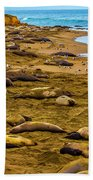 Elephant Seals Near Cambria  Beach Towel