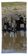 Elephants In The Mirror Beach Towel