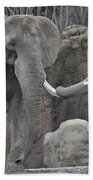 Elephants Playing 3 Beach Towel