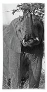 Elephant's Supper Time In Black And White Beach Towel