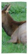 Elk Cow Beach Towel