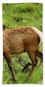 Elk Doe Beach Towel