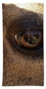 Elk Eye Close Up Beach Towel