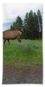 Elk Feeding Beach Towel