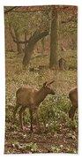 Elk In The Early Morning Beach Towel