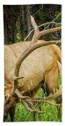 Elk In The Woods Beach Towel