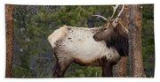 Elk Looking Back Beach Towel